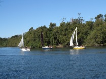 Sail Boats, Stotts Island, Tweed River