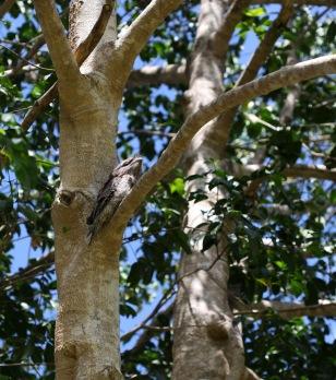 blueyhillpark_birdintree_pbudd_crop_10212016_7223-copy